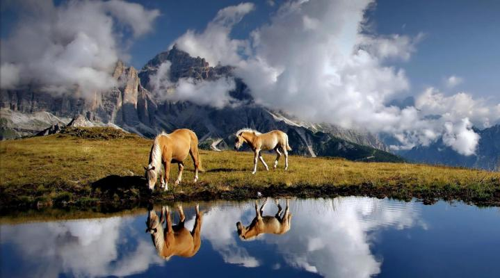 Mountain Horse Widescreen Desktop Wallpaper 1177