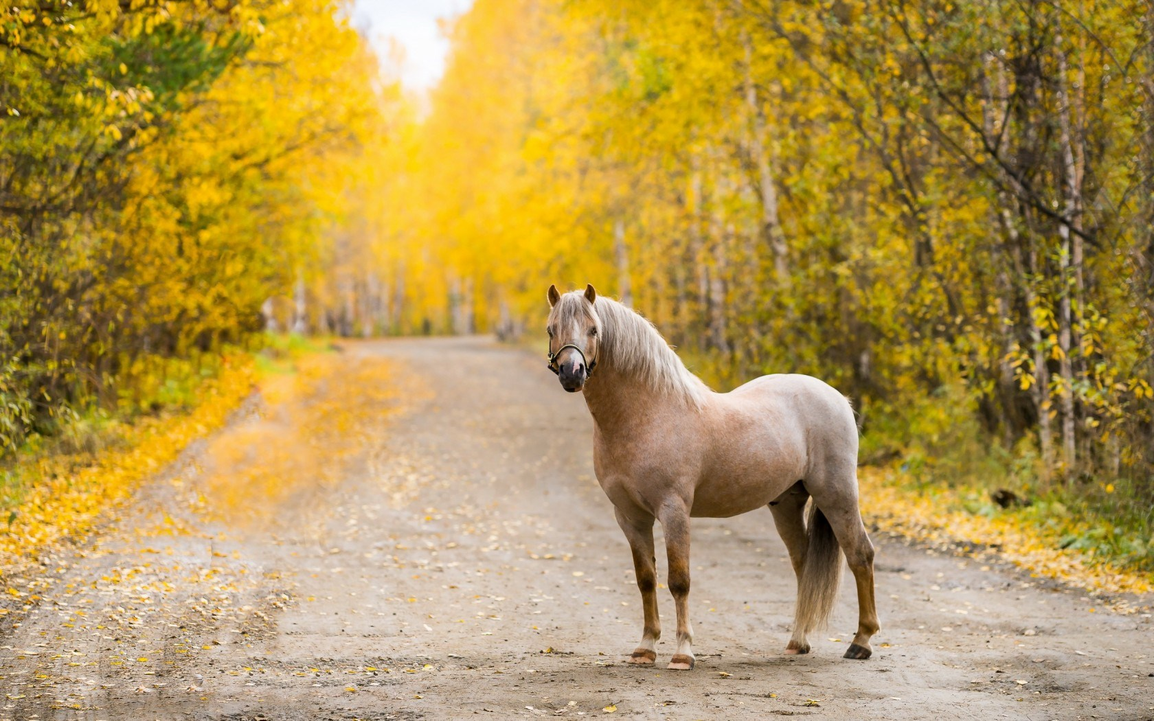 white horse in forest widescreen computer background 1180