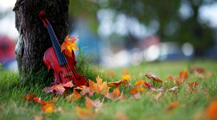 Violin Photography Wallpaper 390