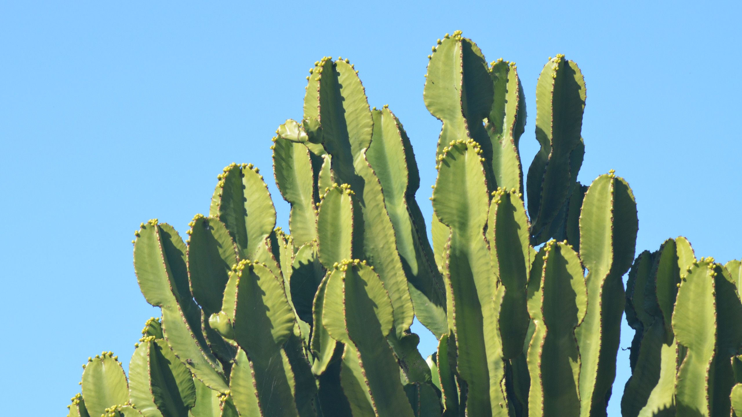 Download Cactus Wallpaper Background Pictures 49 2560x1440 Px High