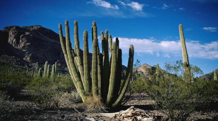 Cactus Nature Wallpaper HD 50