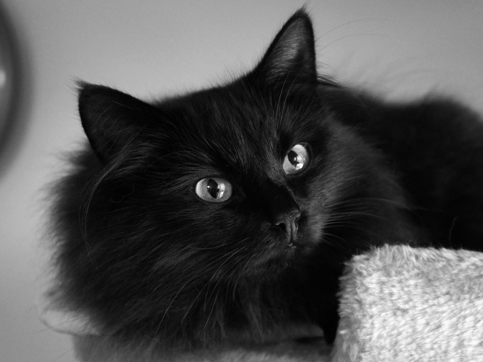 Black Cat Wallpaper 304 1600x1200 Px Pickywallpapers Com