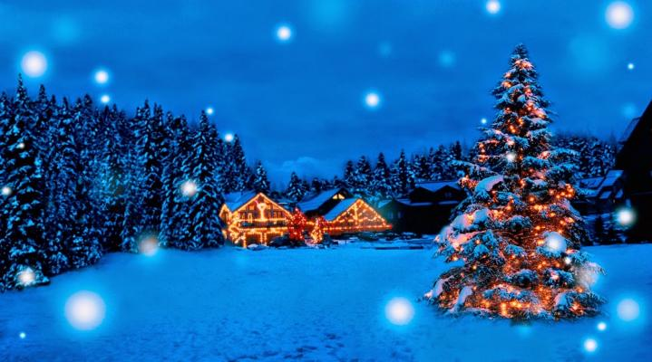 Christmas Tree Winter HD Wallpaper 1983